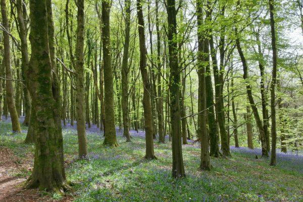 Tongwynlais to Wenallt Circular Walk