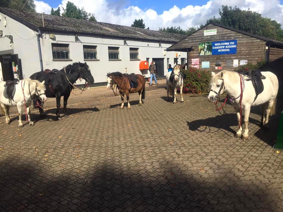 Horses at Cardiff Riding School