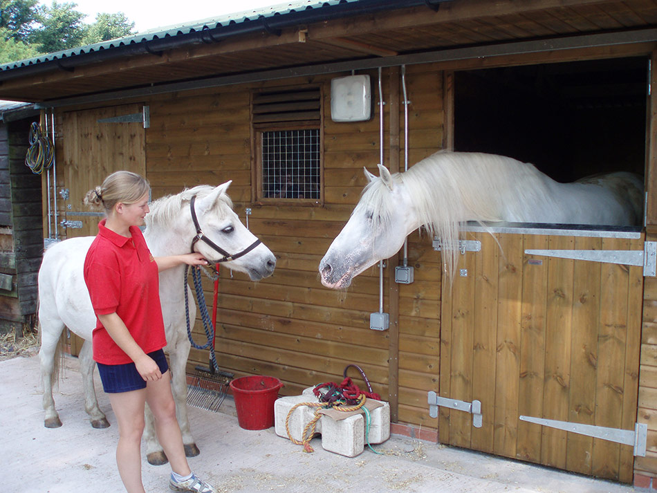 Cardiff Riding School horses - available for Horse Riding training