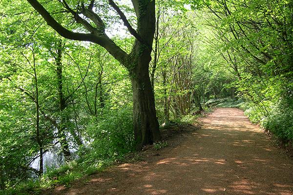 Ely Trail