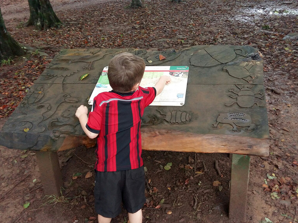A child exploring the Fforest Fawr nature trail