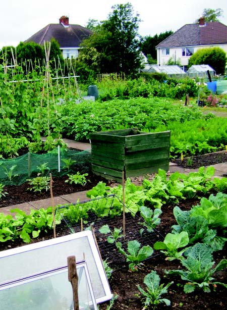Grow your own at a Cardiff Allotment