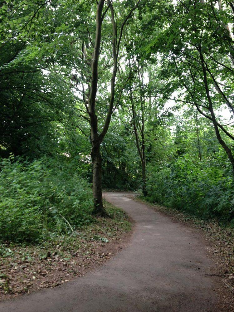 Rumney trail